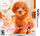 Nintendogs Cats Toy Poodle New Friends Nintendo 3DS Nintendo 3DS